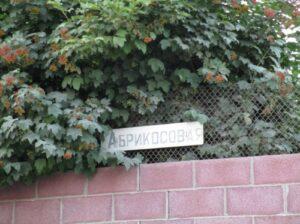 На улице Каштановой