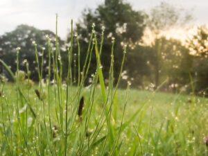 травы,травы